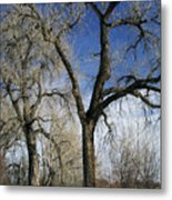 A Winter Kiss Metal Print