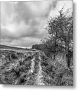 A Winter Track Metal Print