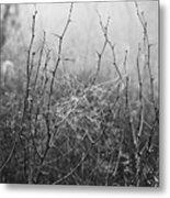A Winter Web Metal Print