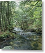 A Woodland View With A Rushing Brook Metal Print