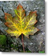 A Work Of Nature's Art Metal Print