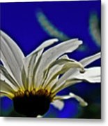 A Worms Eye View Of A Daisy Metal Print