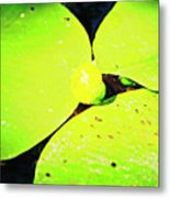 A Yellow Bud Of Waterlily Metal Print