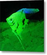 A Yellow Fish  Metal Print