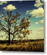 A Yellow Tree In A Middle Of A Dry Field - Wide Angle Metal Print