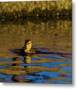 A Young Duckling Metal Print