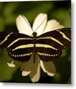 A Zebra-winged Butterfly At The Lincoln Metal Print