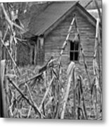 Abandoned Farmhouse Through Cornfield Metal Print