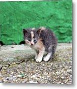 Abandoned Kitten On The Street Metal Print