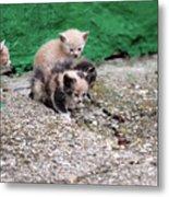 Abandoned Kittens On The Street Metal Print