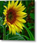 About Face And Stand Tall Metal Print