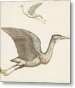 Above A Flying Crane And Beneath A Flying Pelican, Anonymous, 1688 - 1698 Metal Print