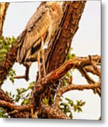 Above The Fray Metal Print