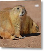Absolutely Adorable Prairie Dog With  A Friend Metal Print