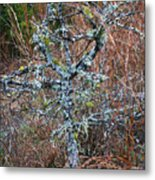 Abstract And Lichen Metal Print