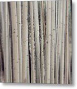 Abstract Aspen Tree Trunks Metal Print