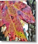 Abstract Autumn Leaf 2 Metal Print