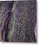 Abstract Bark 6 Metal Print
