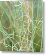 Abstract Curly Grass One Metal Print