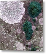 Abstract Lichen Metal Print
