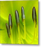 Abstract Lily Flower Metal Print