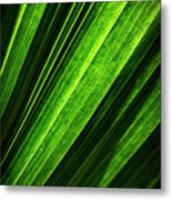 Abstract Of Green Leaf Of Exotic Palm Tree Metal Print