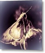 Abstract Of Skipper Butterfly Metal Print