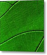 Abstract Rain Forest Metal Print