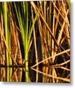 Abstract Reeds Triptych Top Metal Print