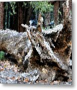 Abstract Sequoia Tree Metal Print