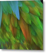 Abstractions From Nature - Pigeon Feathers Metal Print
