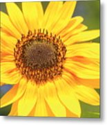 Aburst Of Yellow Metal Print