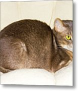 Abyssinian Cat On Chair Pillow, Symbol Of Comfort Metal Print