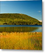 Acadia, National Park Shoreline And Marsh Maine Metal Print