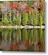Acadia Tree Reflections Metal Print