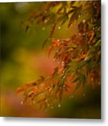 Acer Jewels Metal Print