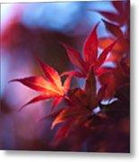 Acer Kaleidoscope Metal Print