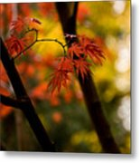Acer Silhouette Metal Print