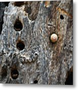 Acorn Woodpecker Cache, Sequoia National Park, Ca  September 2016 Metal Print