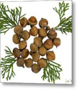 Acorns With Cedar Metal Print