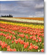 Across Colorful Fields Metal Print