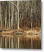 Across Skymount Pond - Autumn Browns Metal Print
