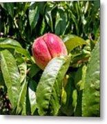 Adams County Peach Metal Print