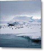 Adelie Penguins On Iceberg Weddell Sea Metal Print