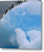 Adelies In Blue Iceberg Metal Print