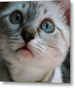 Adorable Kitty  Metal Print