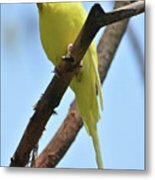 Adorable Little Yellow Parakeet In A Tree Metal Print