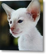 Adorable Siamese Cat Metal Print