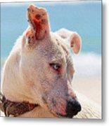 Adorable Small Dog On The Beach Metal Print