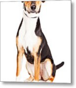 Adorable Young Mixed Breed Puppy Dog Metal Print